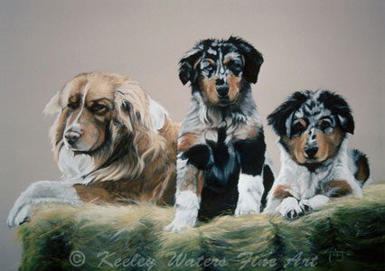 Aussies by Keeley Waters